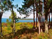 lake-thru-trees